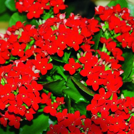 Kwiaty Doniczkowe Strona 2 Mój Piękny Ogród