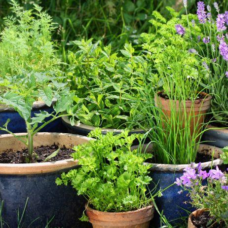 Donice Dekoracyjne Mój Piękny Ogród Ogrody Ozdobne