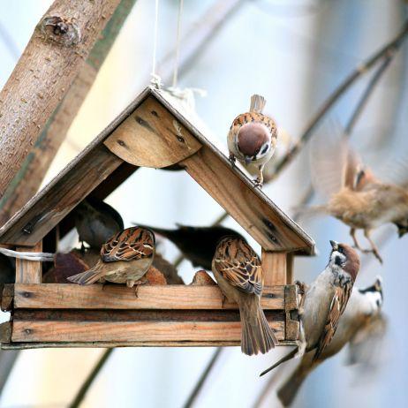 Ptasia Stołówka Dokarmianie Ptaków W Zimie Mój Piękny
