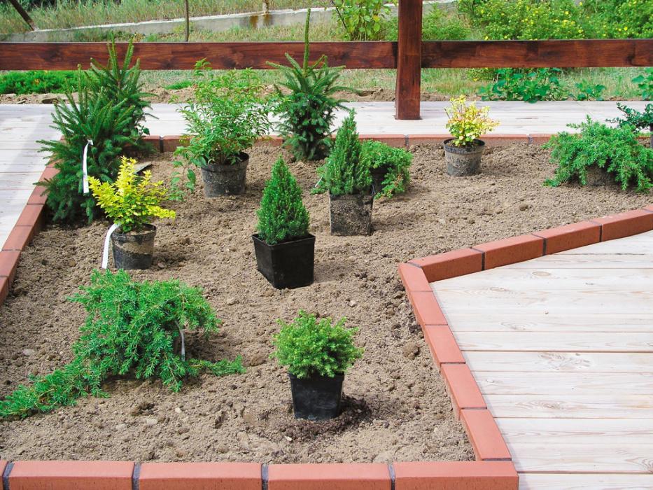 Sadzenie Iglaków Mój Piękny Ogród Ogrody Ozdobne