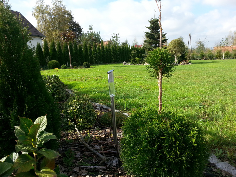 47a309cd5bac8 Thuje mojej wlasnej produkcji - Mój Piękny Ogród - Ogrody ozdobne ...