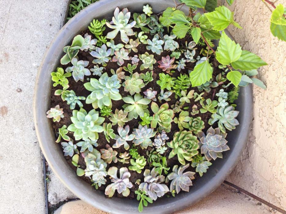 Sukulenty Piękne I łatwe W Pielęgnacji Mój Piękny Ogród