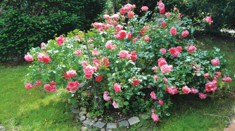 Przepis Na Ogrod Kwiaty Na Sloneczne Rabaty Moj Piekny Ogrod