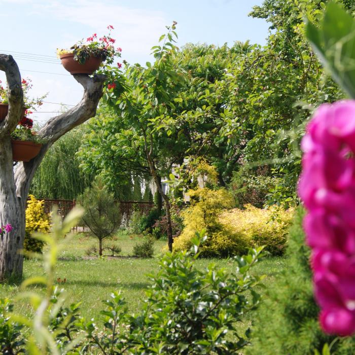 d2d7ea49324c5 Mały raj - Mój Piękny Ogród - Ogrody ozdobne