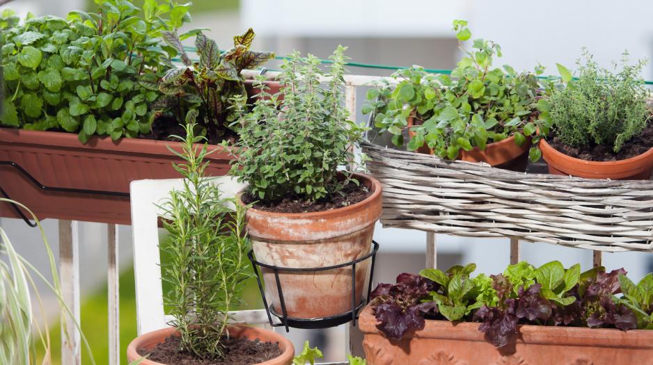Przyprawy W Zasięgu Ręki Mój Piękny Ogród Ogrody Ozdobne