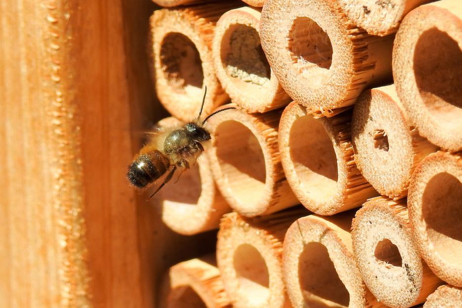 Praktyczny Ogrodnik Zapraszamy Pszczoły Do Ogrodu Mój