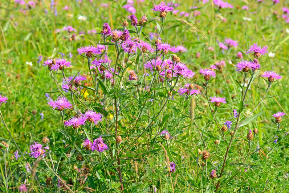 Laka Kwiatowa Moj Piekny Ogrod Ogrody Ozdobne Rosliny Kwiaty