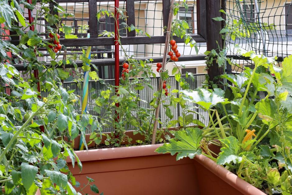 Udają Się W Doniczkach Mój Piękny Ogród Ogrody Ozdobne