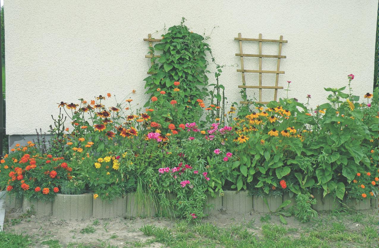 Podwyższona Rabata Zalety Podwyższonej Rabaty Mój Piękny Ogród Ogrody Ozdobne Rośliny Kwiaty