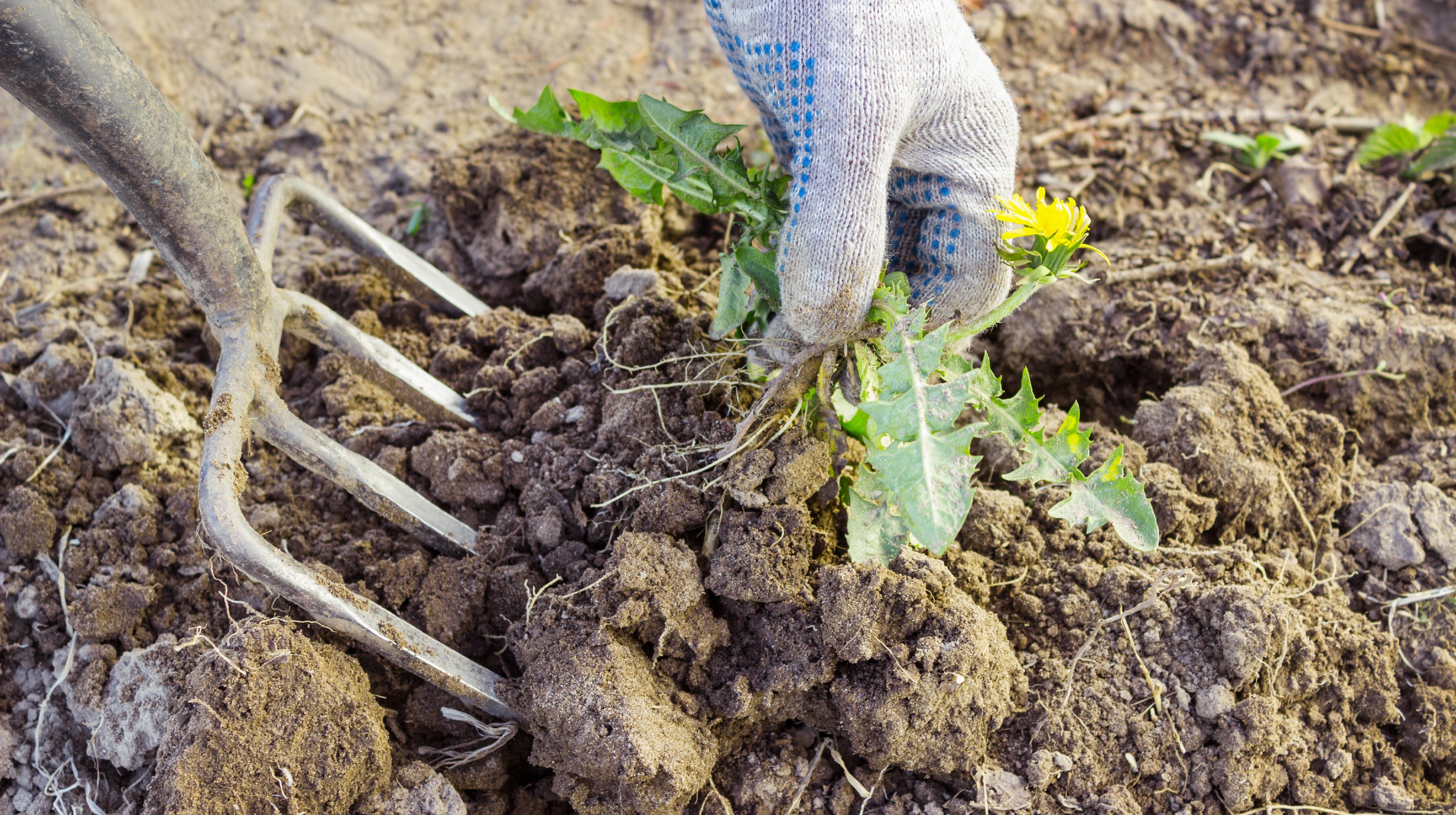 Przygotowanie Gleby W Nowo Zakladanym Ogrodzie Moj Piekny Ogrod Ogrody Ozdobne Rosliny Kwiaty