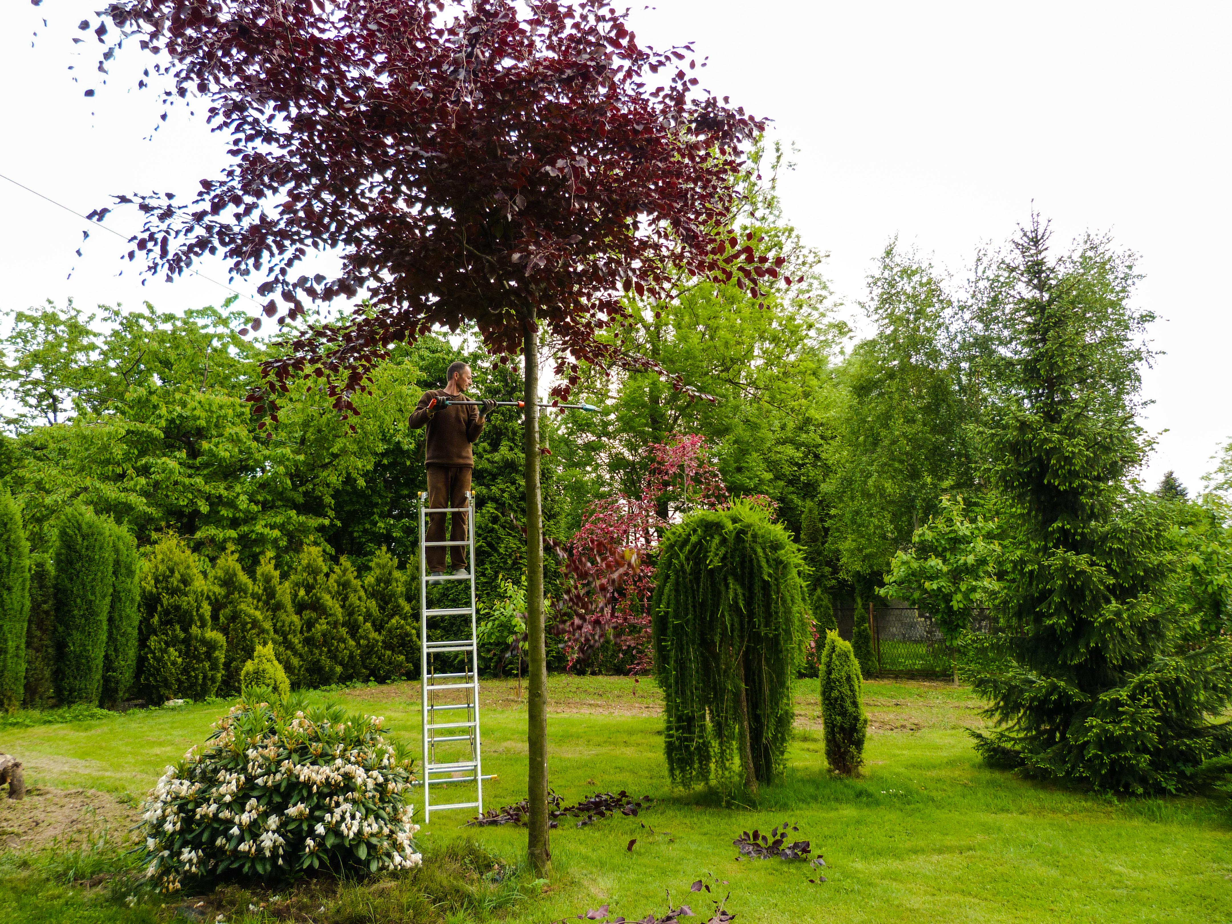 5581cd16f1139 Nasz ogród pełen kolorów - Mój Piękny Ogród - Ogrody ozdobne ...