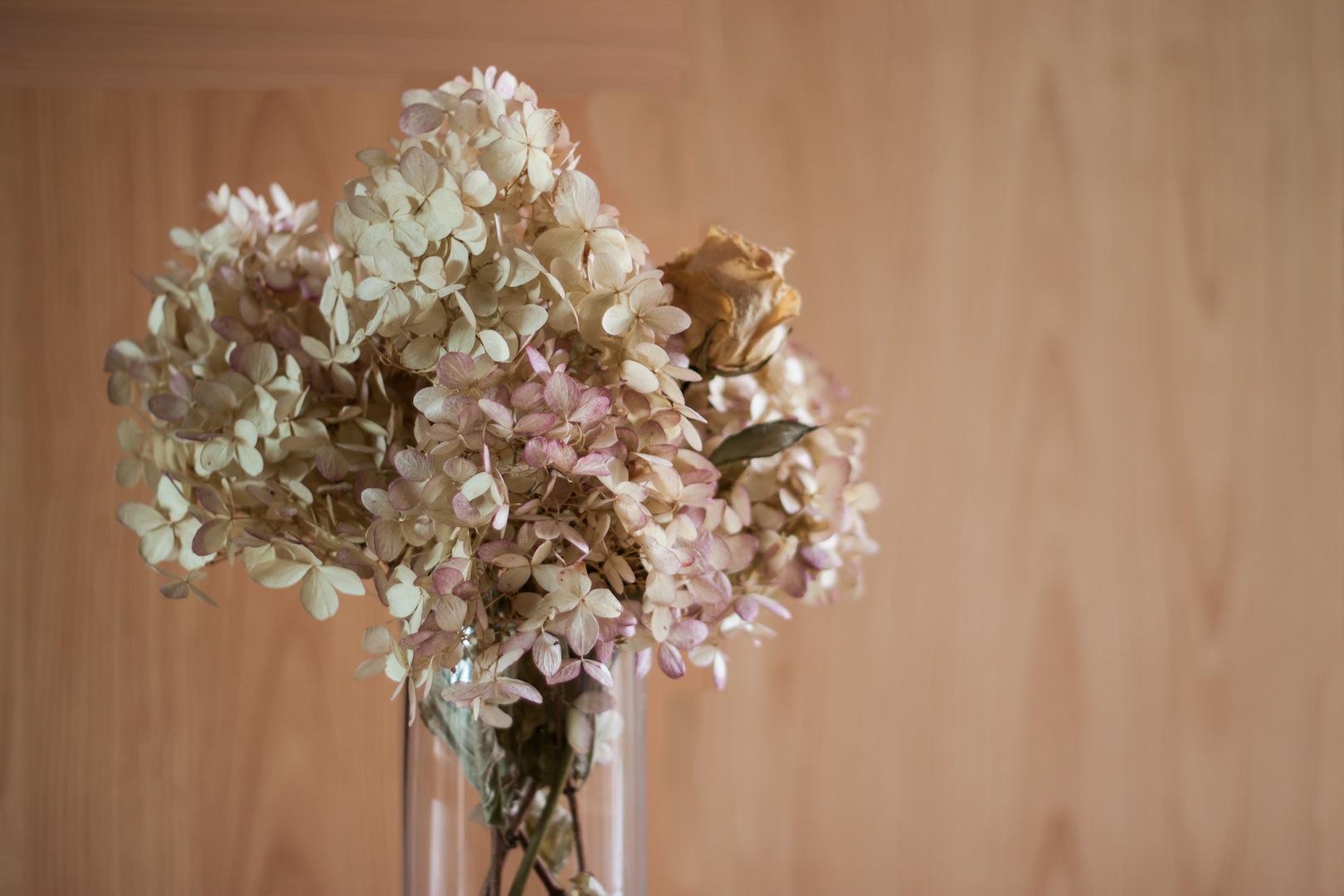 Suszenie Hortensji Moj Piekny Ogrod Ogrody Ozdobne Rosliny Kwiaty
