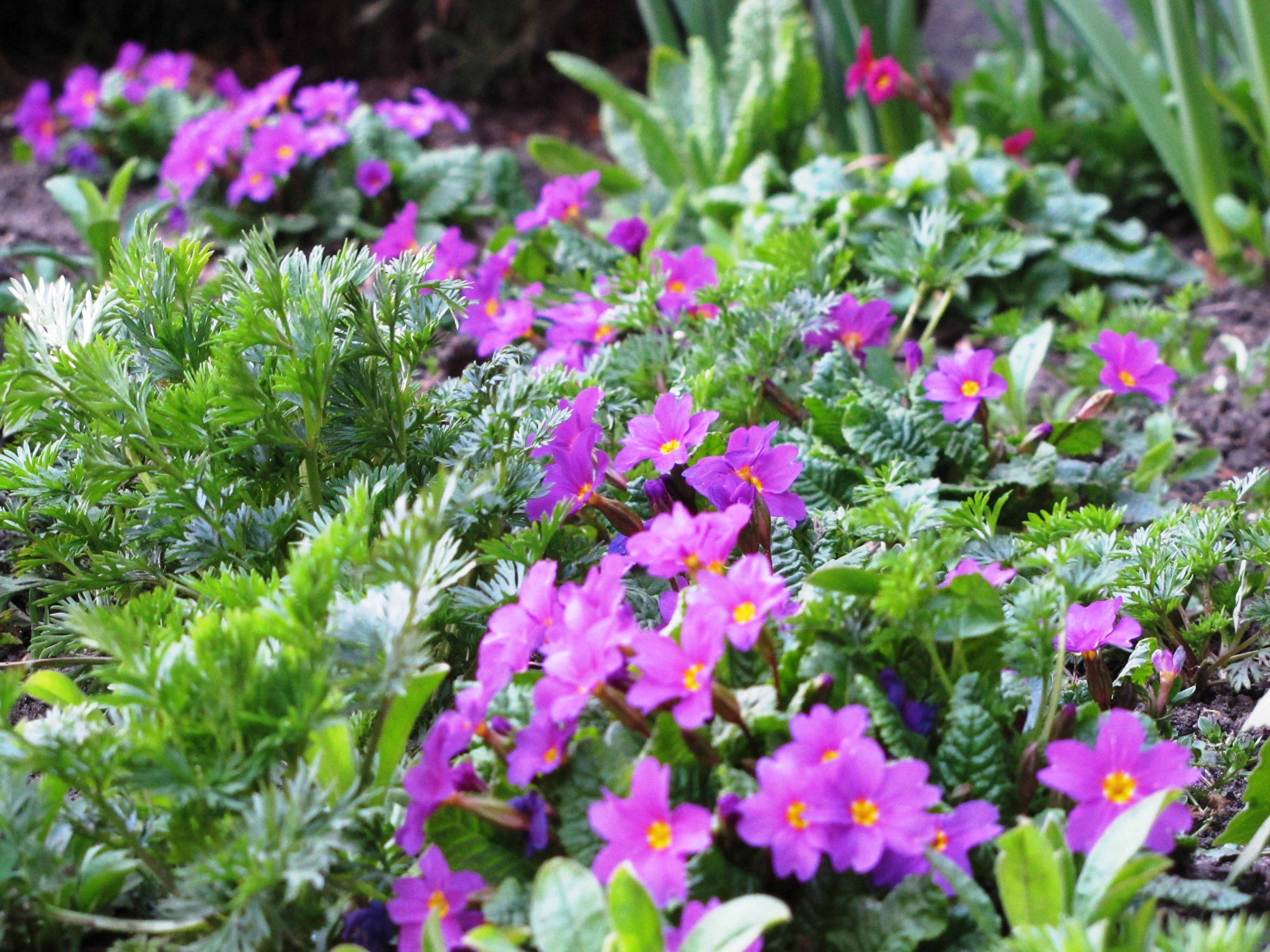 Marcowe Kwiaty Mój Piękny Ogród Ogrody Ozdobne Rośliny