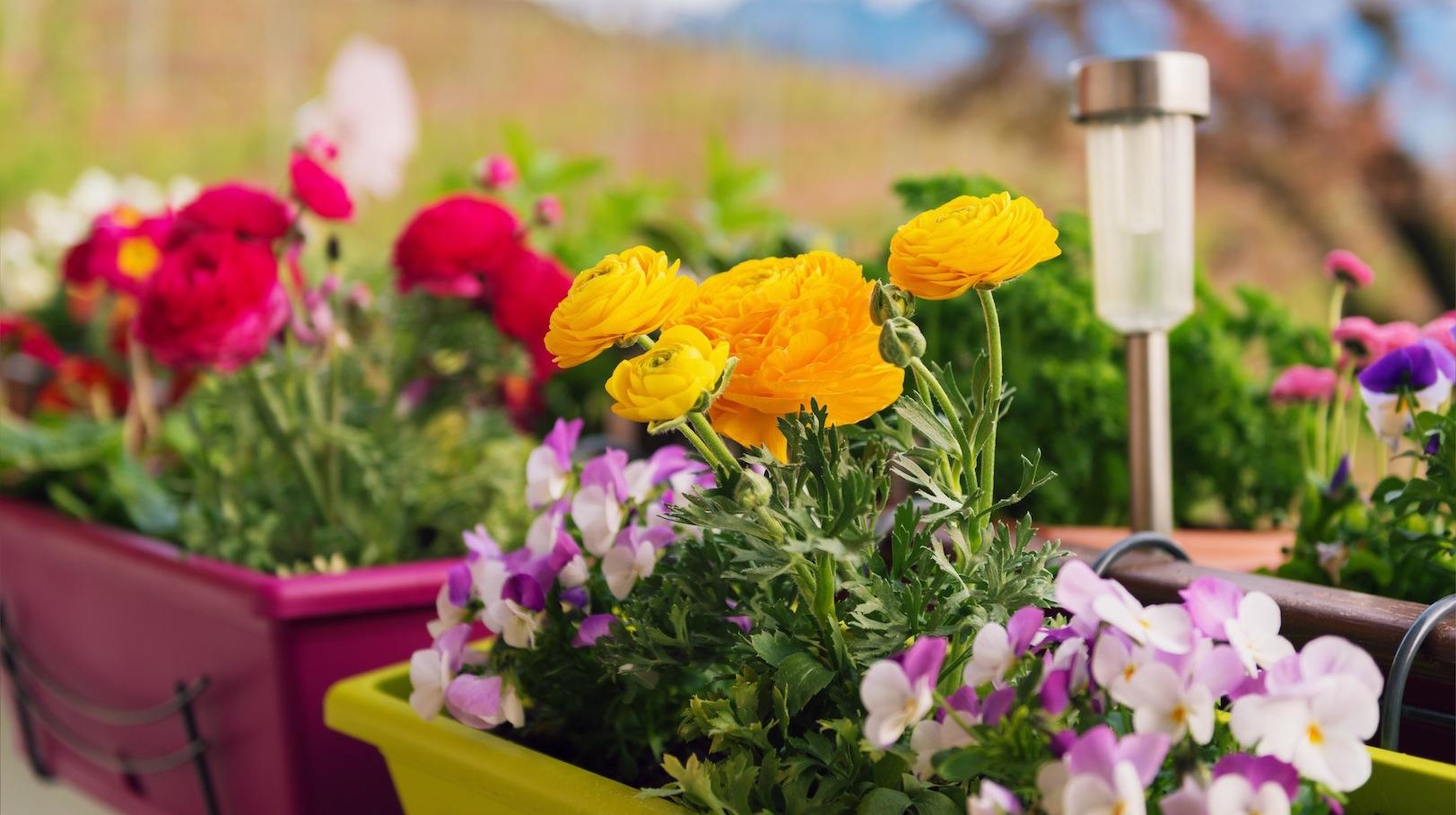 Modne Pomysły Na Balkonowe Skrzynki Mój Piękny Ogród