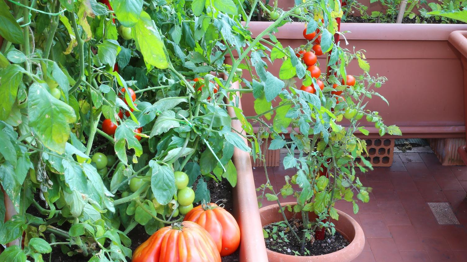 Balkon Lepszy Od Warzywnika Mój Piękny Ogród Ogrody