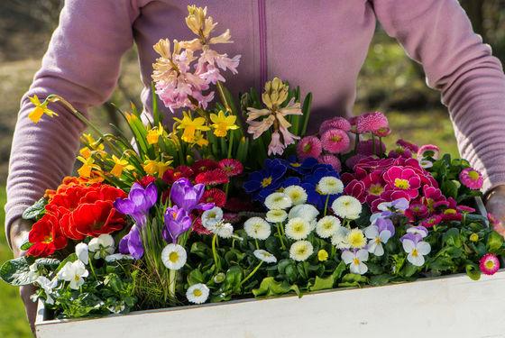 38 Skierniewickie święto Kwiatów Owoców I Warzyw Mój Piękny
