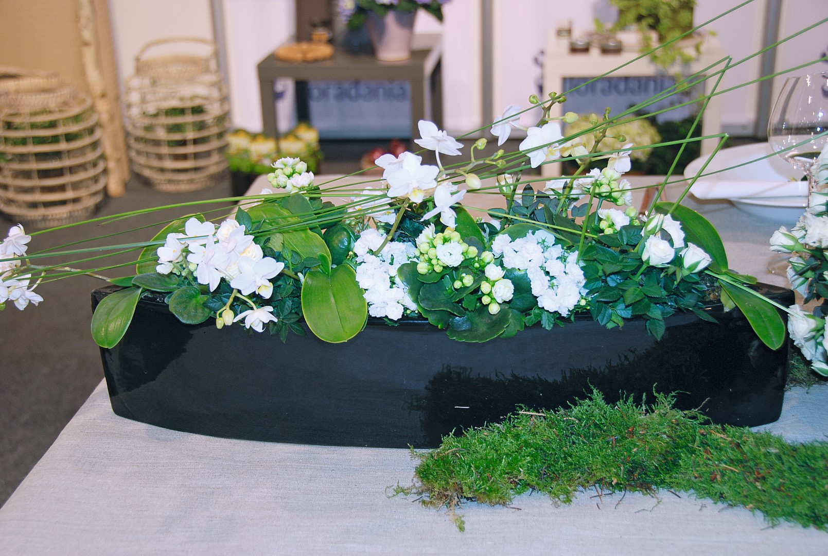 Rośliny Doniczkowe Alternatywą Dla Kwiatów Ciętych