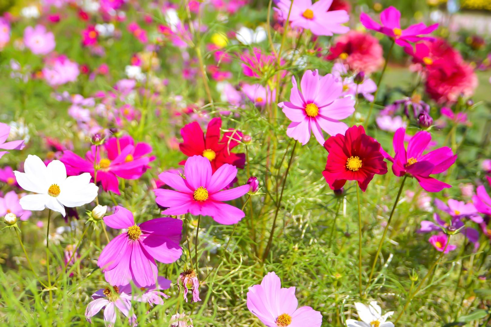 Kwiaty Na Caly Sezon Moj Piekny Ogrod Ogrody Ozdobne Rosliny Kwiaty