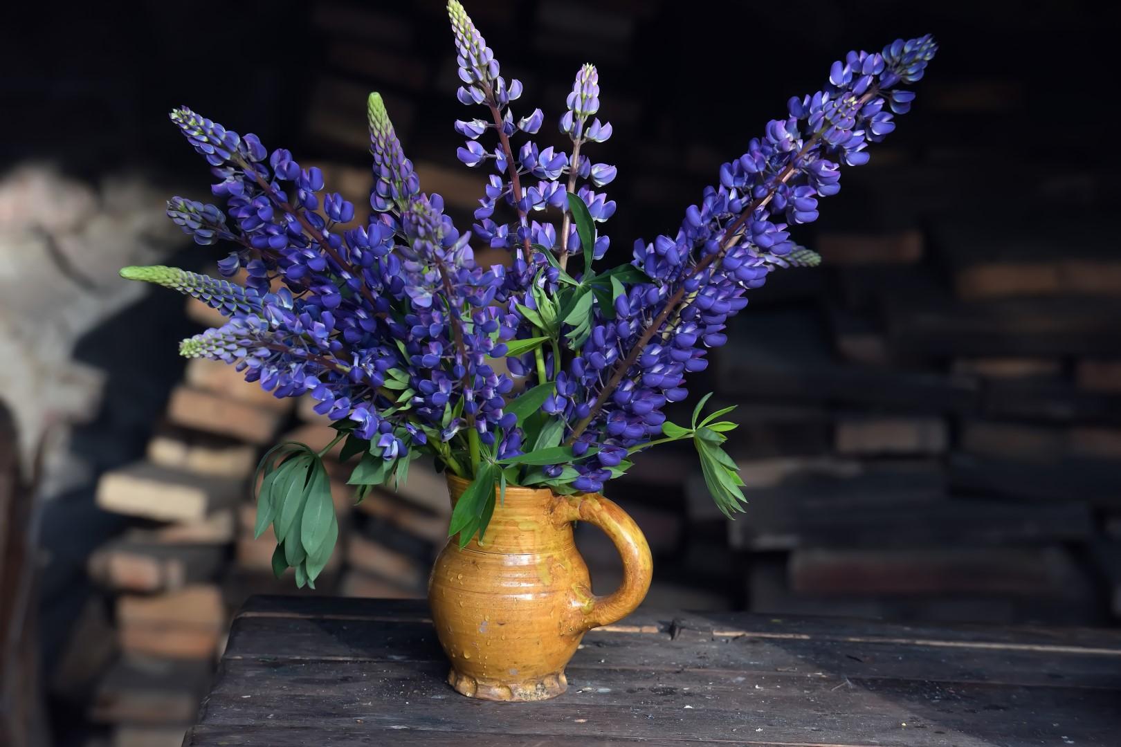 Tak Dbamy O Letnie Kwiaty Cięte Mój Piękny Ogród Ogrody